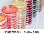 petry dishes on laboratory table | Shutterstock . vector #608675501