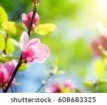 pink magnolia flower on green... | Shutterstock . vector #608683325