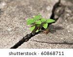 Weed Growing Through Crack In...