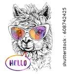 Lama Alpaca In Eyeglasses ...
