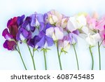 beautiful flowers isolated of...   Shutterstock . vector #608745485