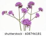 Beautiful Flowers Isolated Of...