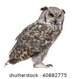 great horned owl  bubo... | Shutterstock . vector #60882775