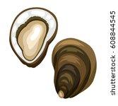 fresh opened oyster. isolated... | Shutterstock .eps vector #608844545