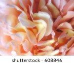 soft focus rose centre | Shutterstock . vector #608846