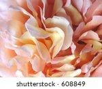 rose details | Shutterstock . vector #608849