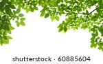Panoramic Green Leaves On Whit...