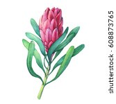 tropical flower protea with... | Shutterstock . vector #608873765