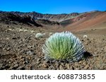 stunning view of a silversword... | Shutterstock . vector #608873855