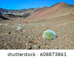 stunning view of a silversword... | Shutterstock . vector #608873861