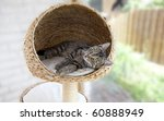Stock photo young kitten resting inside cat tree 60888949