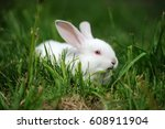 Stock photo baby white rabbit in spring green grass background 608911904