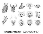 Portrait Of Animals Drawn By...