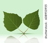 green leaves on a green... | Shutterstock . vector #608953955