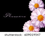 pink vector flowers isolated on ... | Shutterstock .eps vector #609019547