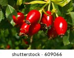 A Bunch Of Rose Hips  The Frui...