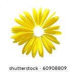 Sunflower Petal