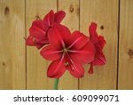 Red Lilly In Front Of Wooden...