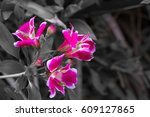 red flowers on a gray background | Shutterstock . vector #609127865