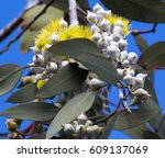 beautiful lemon yellow flowered ... | Shutterstock . vector #609137069
