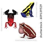 frog poison dart frog frog set...   Shutterstock .eps vector #609139529