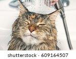 Cat Bath. Wet Cat.