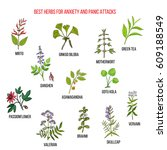 best natural herbs for anxiety... | Shutterstock .eps vector #609188549