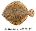 freshly caught turbot fish ... | Shutterstock . vector #60921172