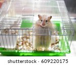 A Hamster Is In A Cage. The...