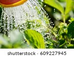 Watering The Plants From A...
