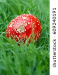 Small photo of Amanita Muscaria in green grass