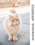 domestic ginger fluffy cat near ... | Shutterstock . vector #609300515
