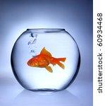 Gold Fish Inside Aquarium
