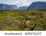 Meadow in Front of Western Brook Pond in Gros Morne National Park in Newfoundland, Canada