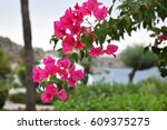 flowers blossoming on a tree at ... | Shutterstock . vector #609375275