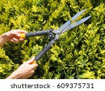 man gardener trimming hedge... | Shutterstock . vector #609375731