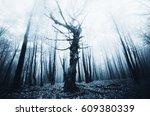 Old Tree In Dark Forest...