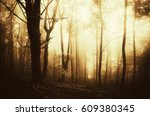 sunset light in fantasy woods... | Shutterstock . vector #609380345