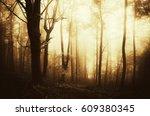 Sunset Light In Fantasy Woods...