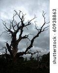 Dry Tree Under Storm Sky