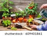 Planting Seedlings In...