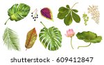 vector tropical plants and...