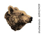 The Bear's Head Profile Lookin...