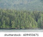 Sea View Green Spruce Trees...