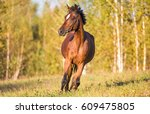 Stock photo horse galloping on grass 609475805