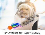 Stock photo cute persian cat playing toy on cat tower 609486527
