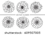 drawing flowers. vector... | Shutterstock .eps vector #609507005