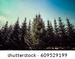 retro style english woodland... | Shutterstock . vector #609529199