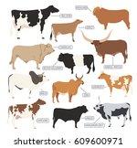 cattle breeding farming. cow ... | Shutterstock .eps vector #609600971