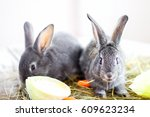 Stock photo gray rabbits eat carrot and cabbage 609623234